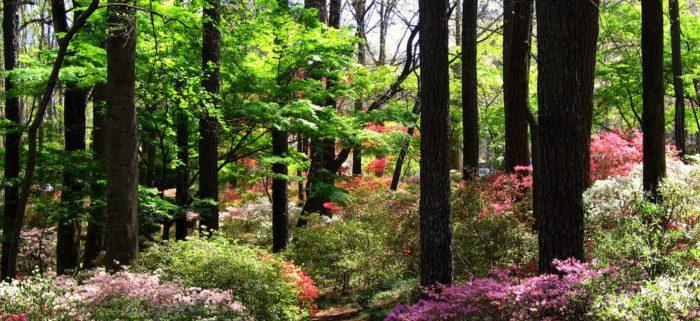 باغ کالاوی در کوهستان کاج