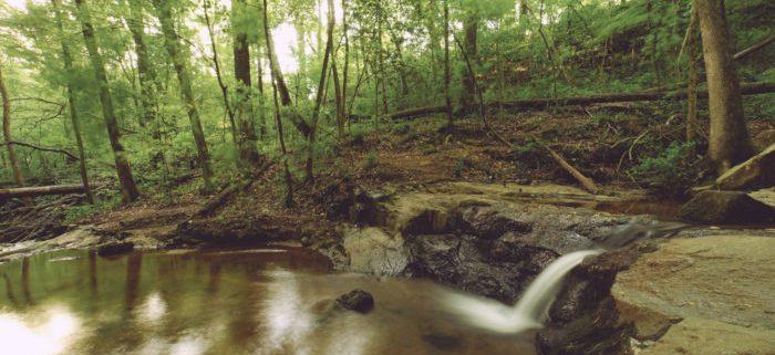 آبشار چشمه طبیعی حفاظت شده در آتلانتا