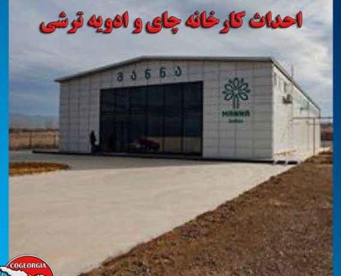 احداث کارخانه چای درگرجستان
