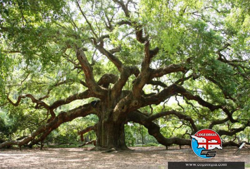 منطقه حفاظت شده جدید درختان بلوط